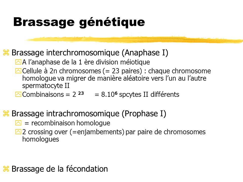 Brassage génétique Brassage interchromosomique (Anaphase I)