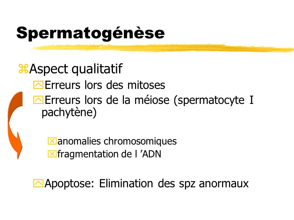 Spermatogénèse Aspect qualitatif Erreurs lors des mitoses