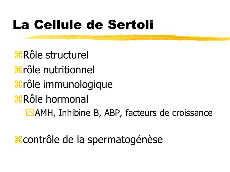 La Cellule de Sertoli Rôle structurel rôle nutritionnel