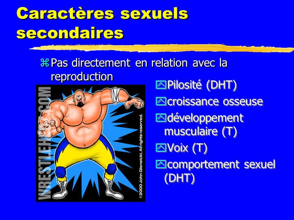 Caractères sexuels secondaires