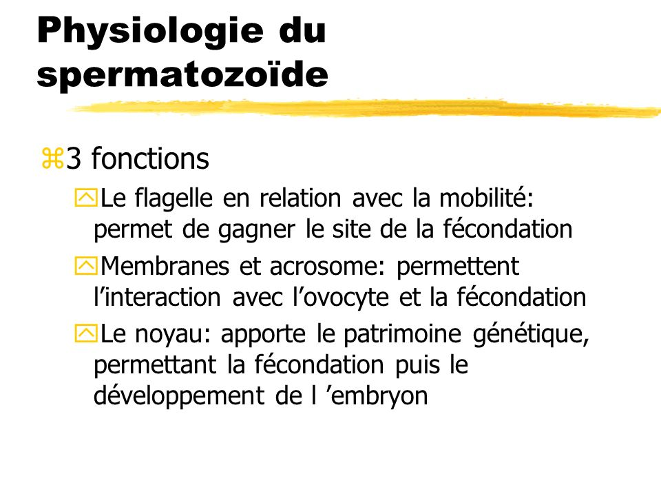 Physiologie du spermatozoïde