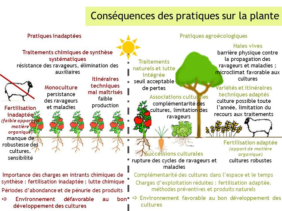 Conséquences des pratiques sur la plante