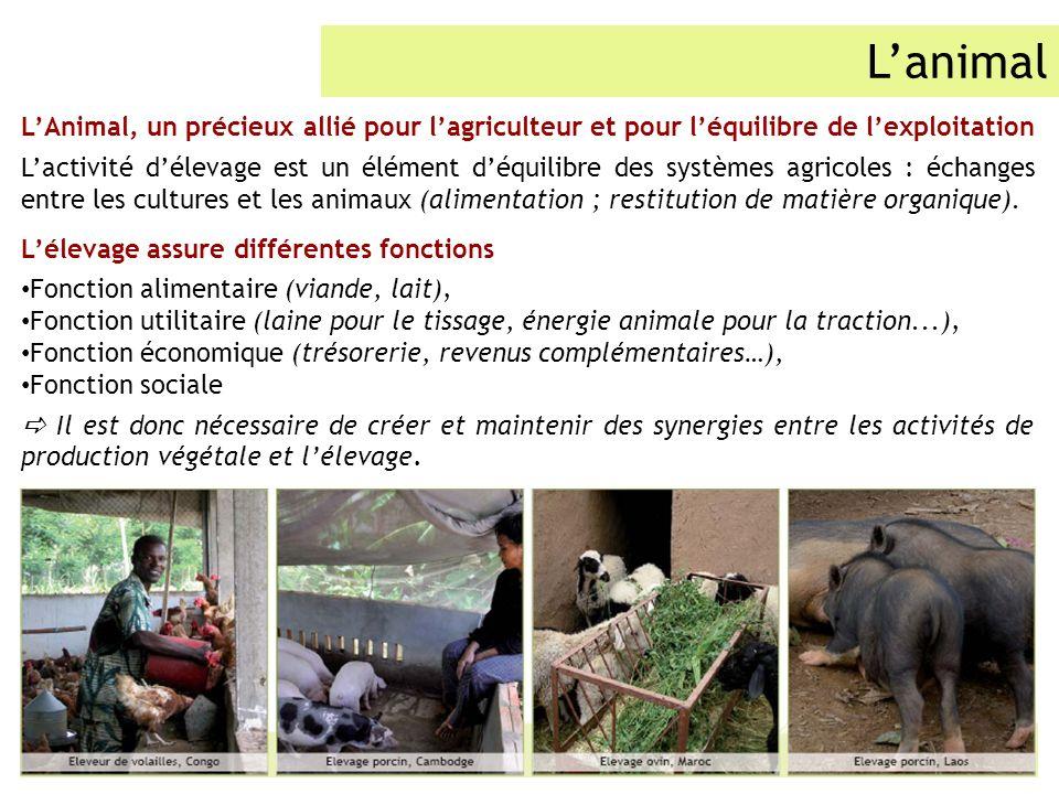 L'animal L'Animal, un précieux allié pour l'agriculteur et pour l'équilibre de l'exploitation.