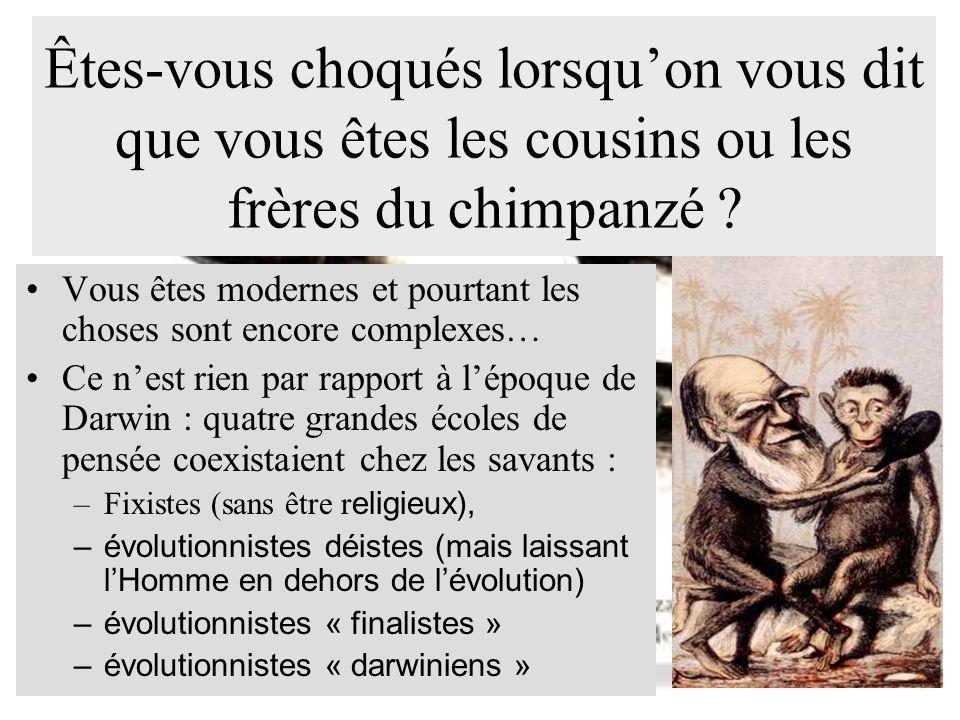 Êtes-vous choqués lorsqu'on vous dit que vous êtes les cousins ou les frères du chimpanzé