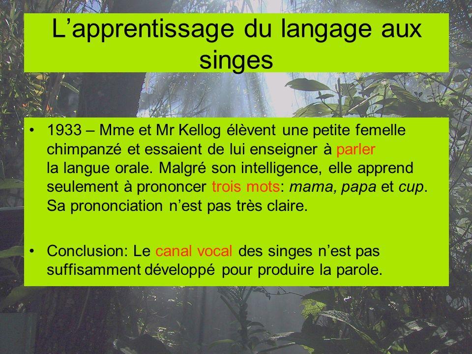 L'apprentissage du langage aux singes