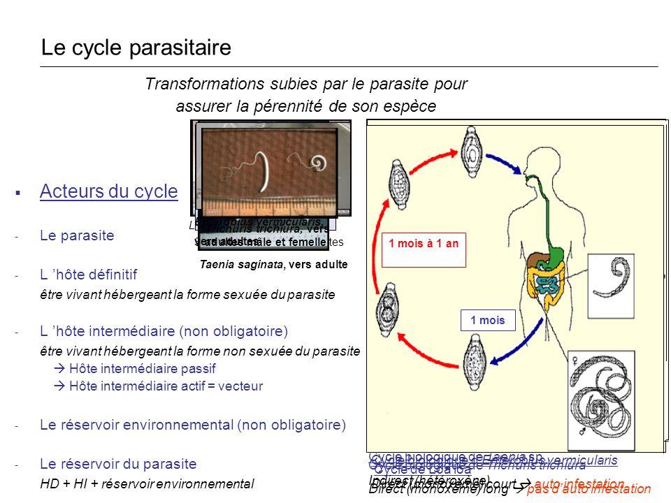 Le cycle parasitaire Acteurs du cycle
