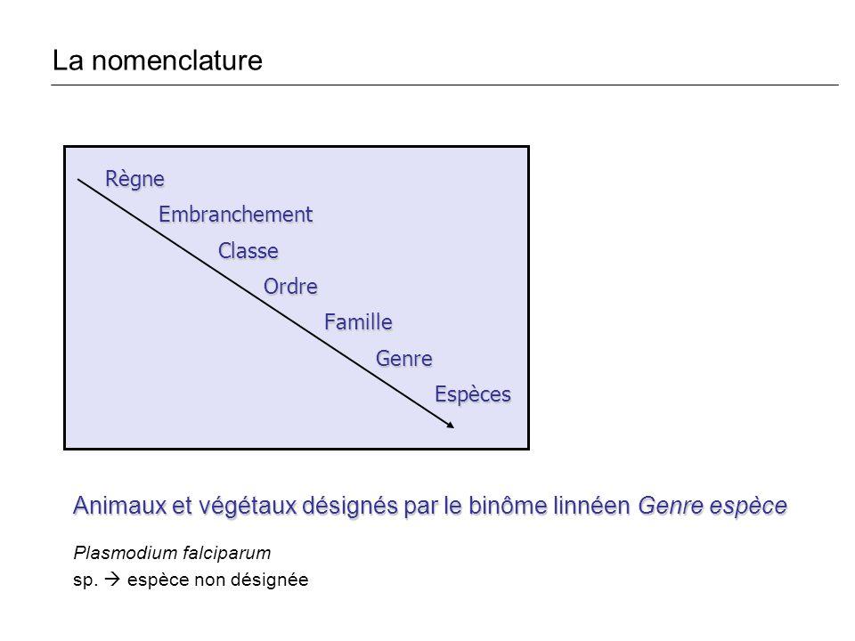 La nomenclature Règne. Embranchement. Classe. Ordre. Famille. Genre. Espèces. Animaux et végétaux désignés par le binôme linnéen Genre espèce.