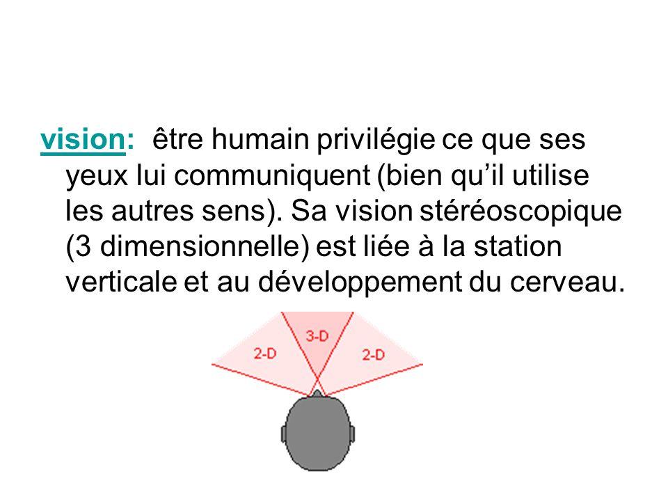 vision: être humain privilégie ce que ses yeux lui communiquent (bien qu'il utilise les autres sens).