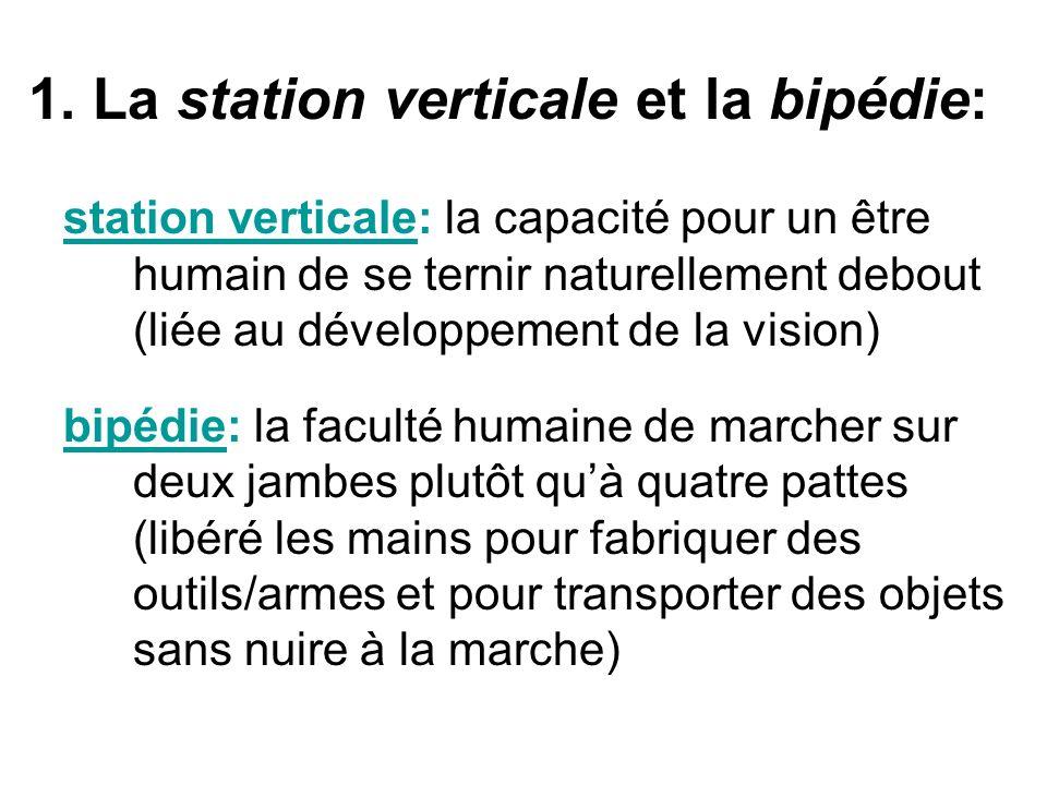 1. La station verticale et la bipédie: