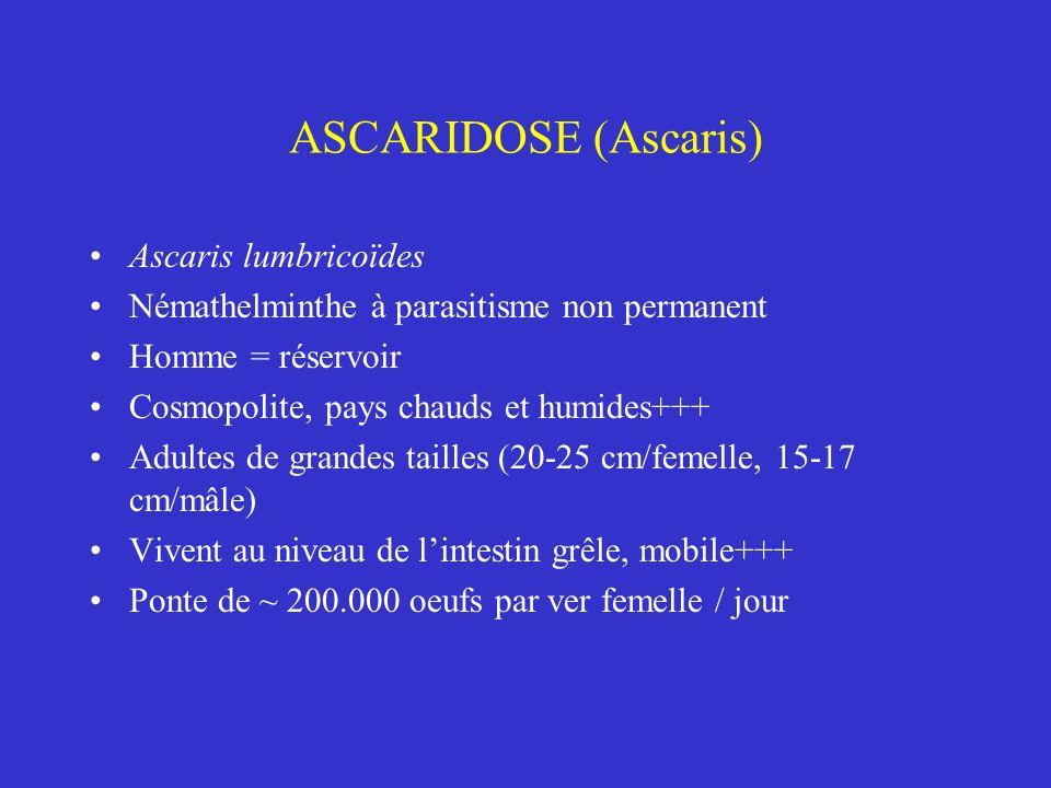 ASCARIDOSE (Ascaris) Ascaris lumbricoïdes