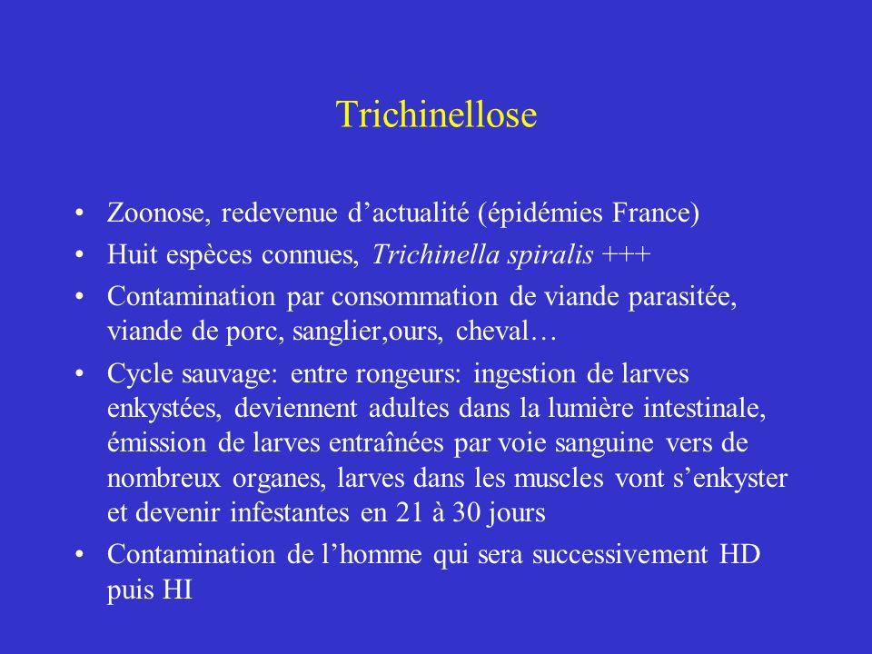 Trichinellose Zoonose, redevenue d'actualité (épidémies France)