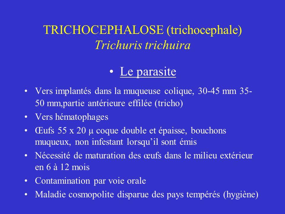 TRICHOCEPHALOSE (trichocephale) Trichuris trichuira