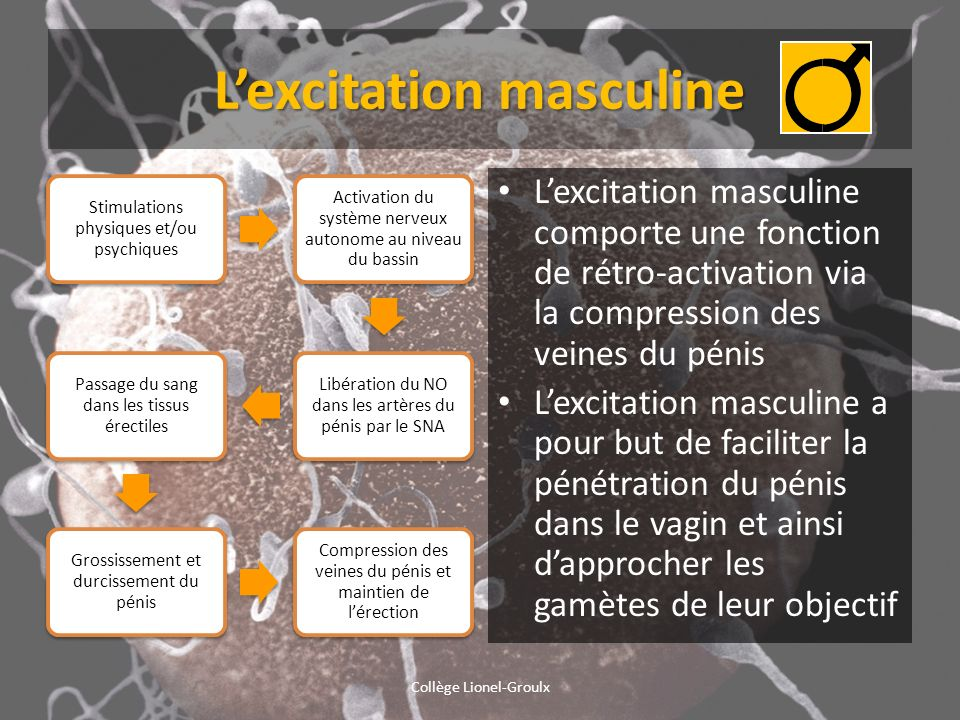 L'excitation masculine