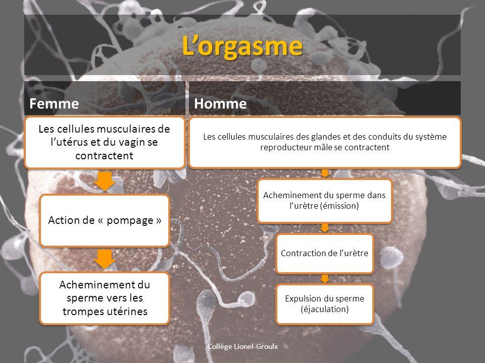 L'orgasme Femme Homme Collège Lionel-Groulx
