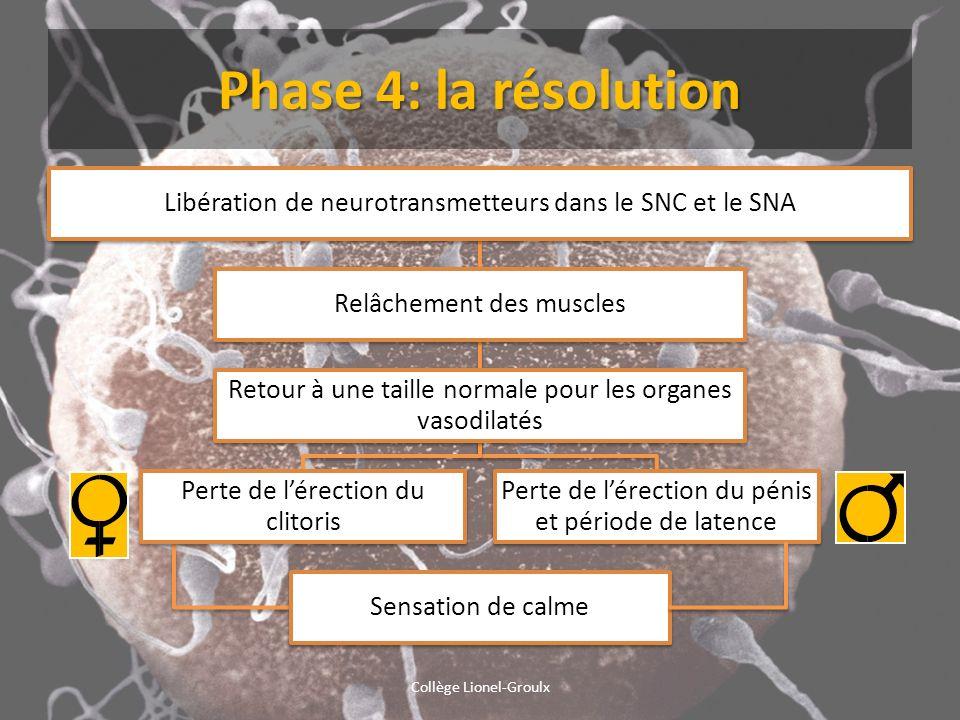 Phase 4: la résolution Collège Lionel-Groulx