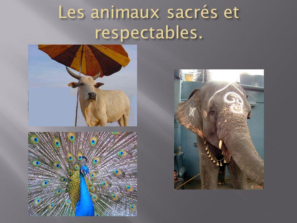 Les animaux sacrés et respectables.