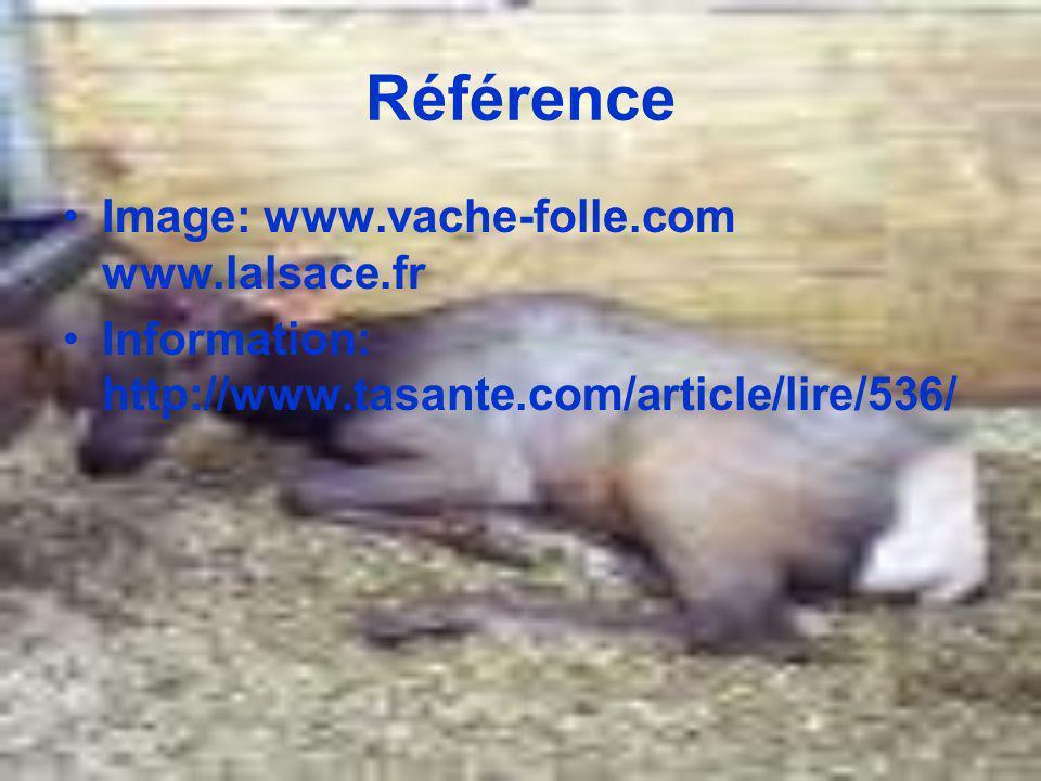 Référence Image: www.vache-folle.com www.lalsace.fr