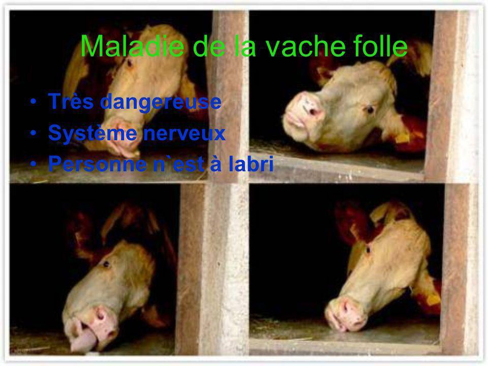 Maladie de la vache folle