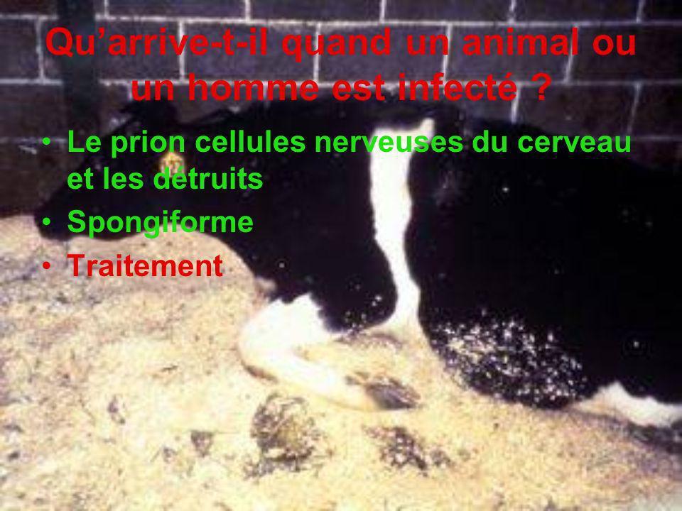 Qu'arrive-t-il quand un animal ou un homme est infecté