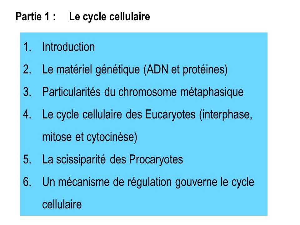 Le matériel génétique (ADN et protéines)