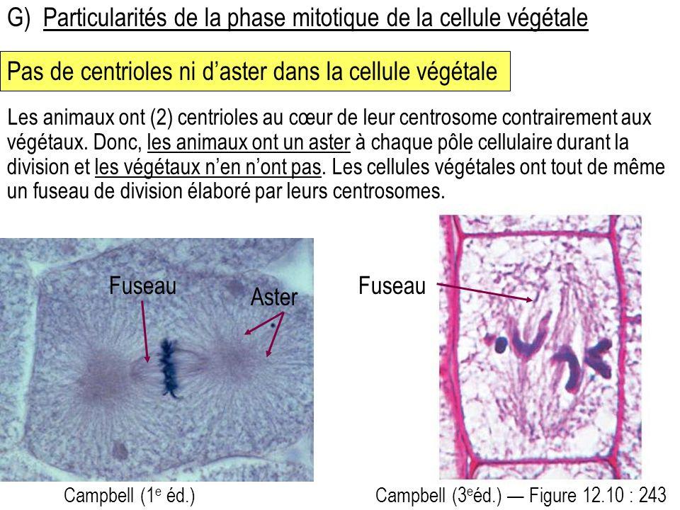 G) Particularités de la phase mitotique de la cellule végétale