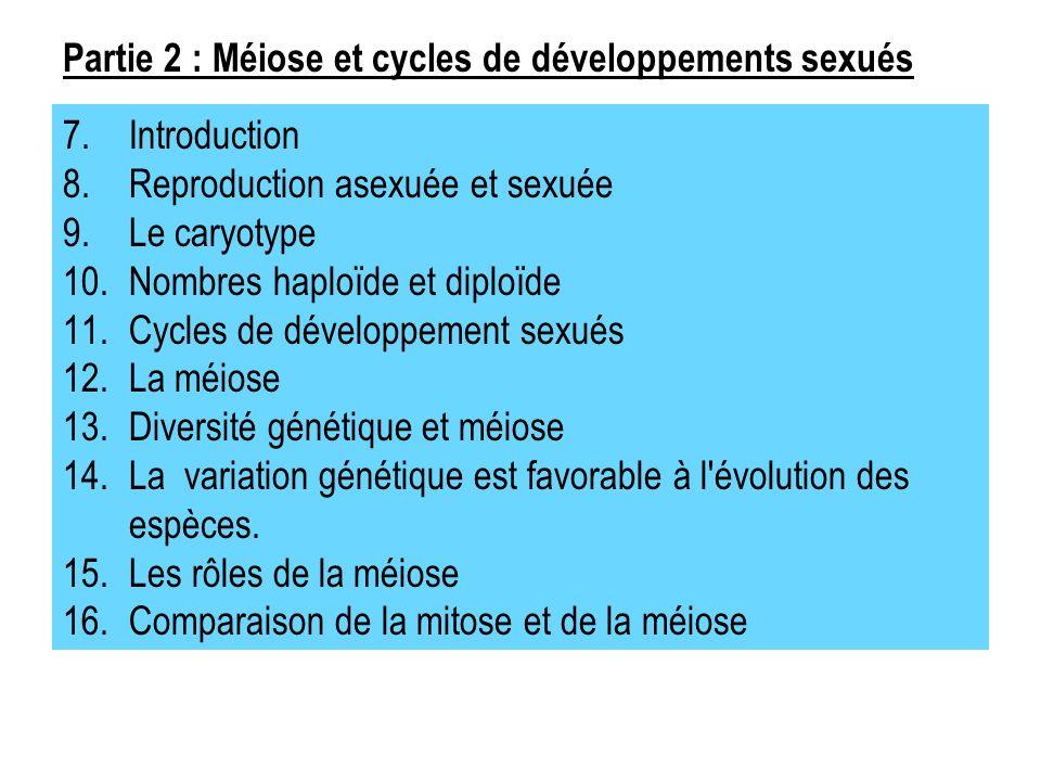 Partie 2 : Méiose et cycles de développements sexués
