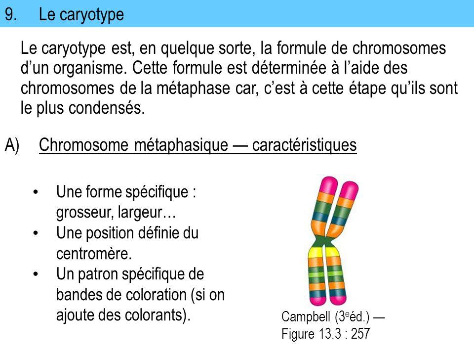 A) Chromosome métaphasique — caractéristiques