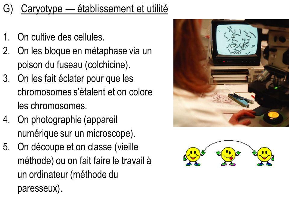 G) Caryotype — établissement et utilité