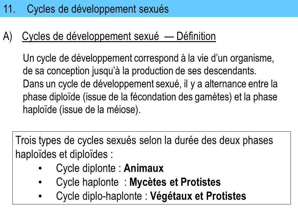 11. Cycles de développement sexués