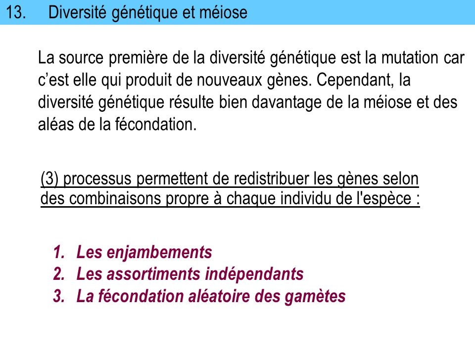 13. Diversité génétique et méiose