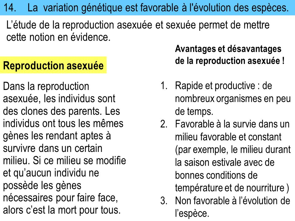 14. La variation génétique est favorable à l évolution des espèces.