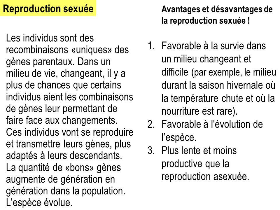 Reproduction sexuée Avantages et désavantages de la reproduction sexuée !