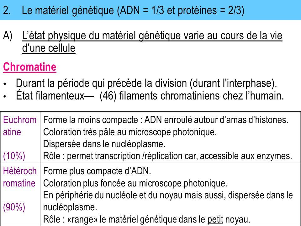 2. Le matériel génétique (ADN = 1/3 et protéines = 2/3)