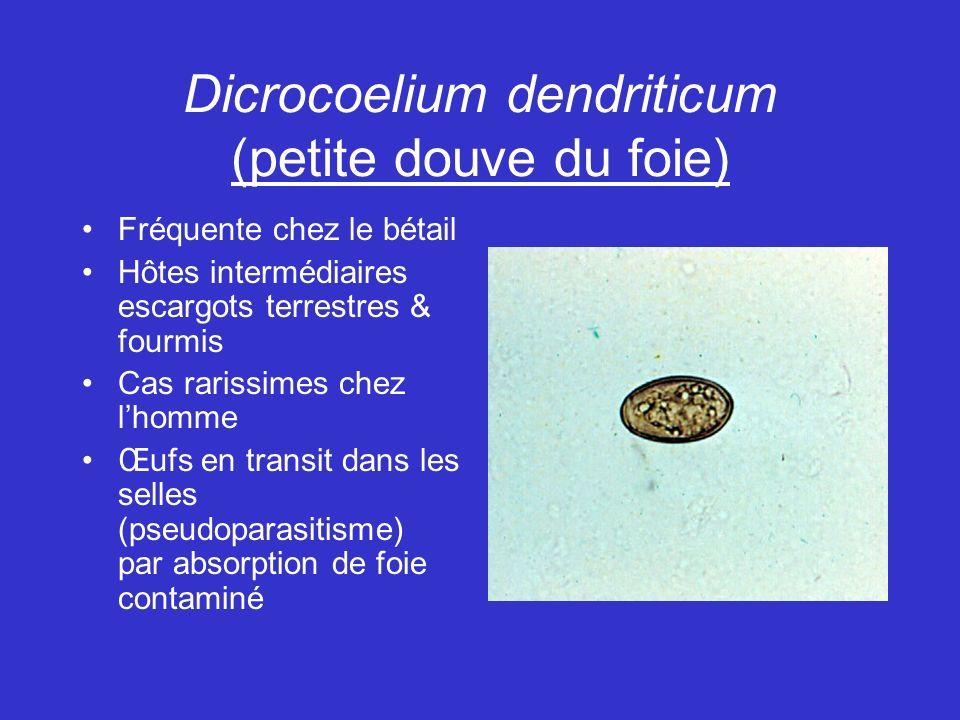 Dicrocoelium dendriticum (petite douve du foie)