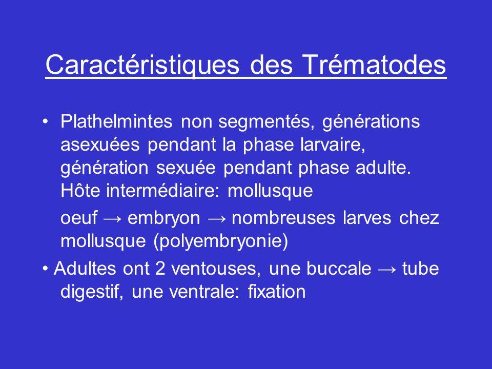 Caractéristiques des Trématodes