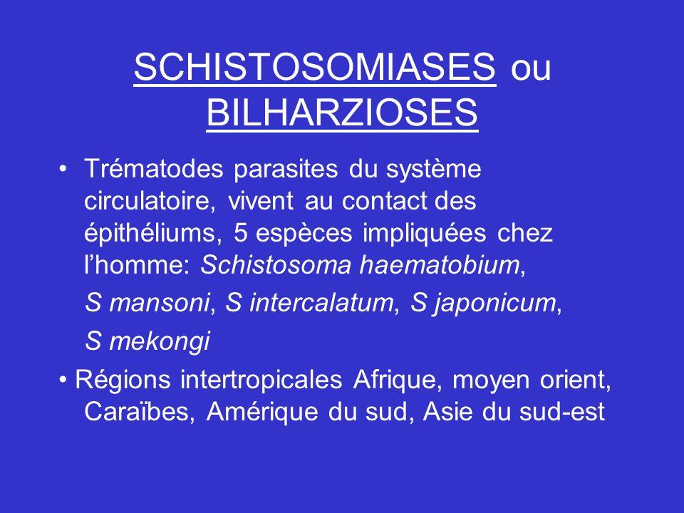 SCHISTOSOMIASES ou BILHARZIOSES