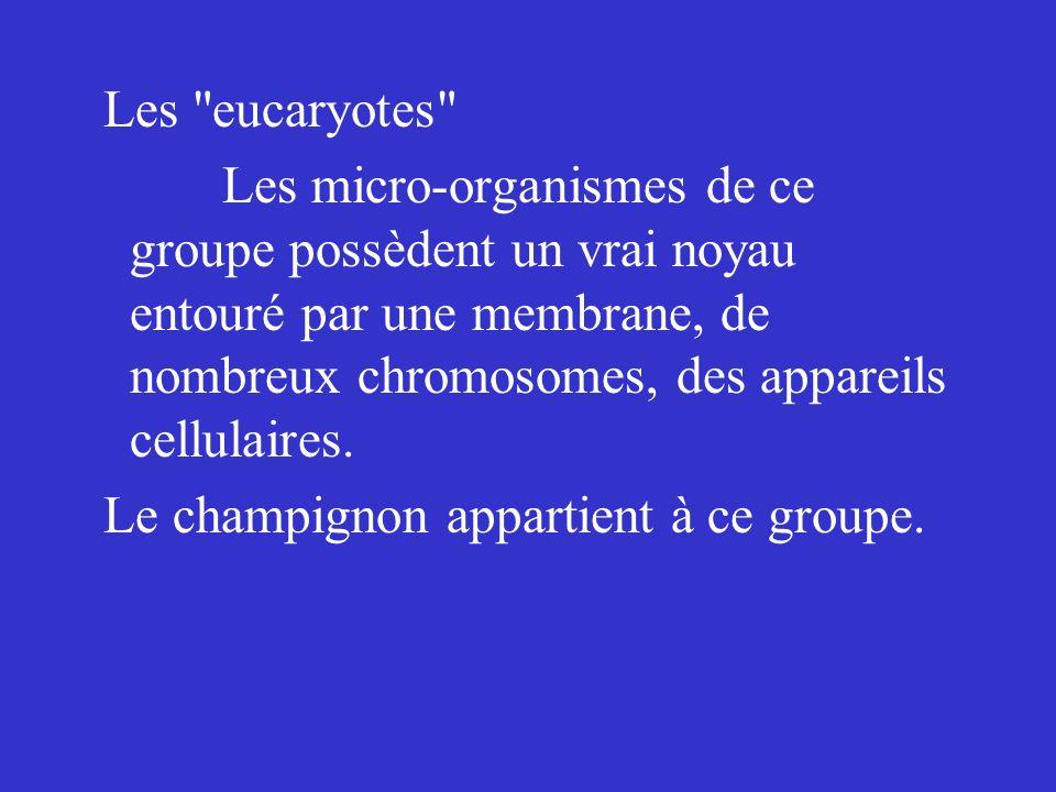 Les eucaryotes Les micro-organismes de ce groupe possèdent un vrai noyau entouré par une membrane, de nombreux chromosomes, des appareils cellulaires.