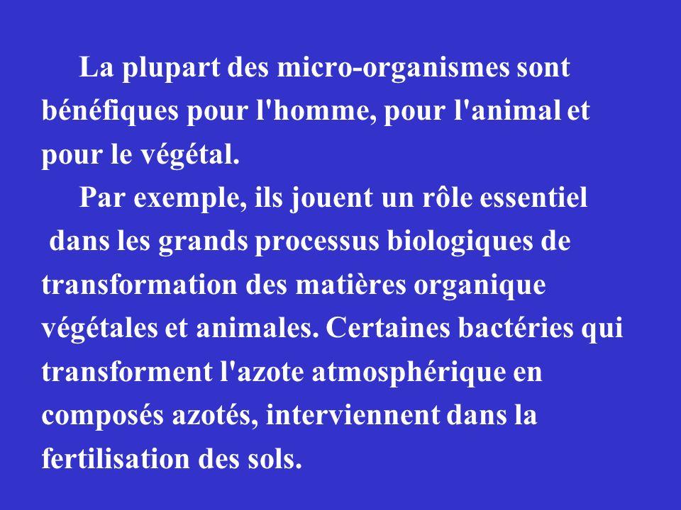 La plupart des micro-organismes sont bénéfiques pour l homme, pour l animal et pour le végétal.