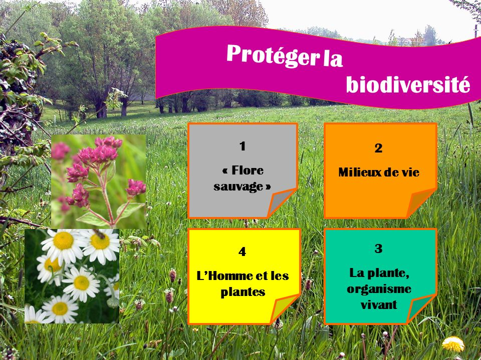 La plante, organisme vivant