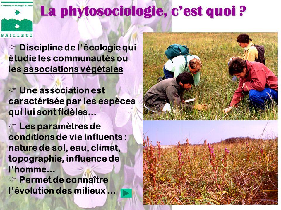 La phytosociologie, c'est quoi