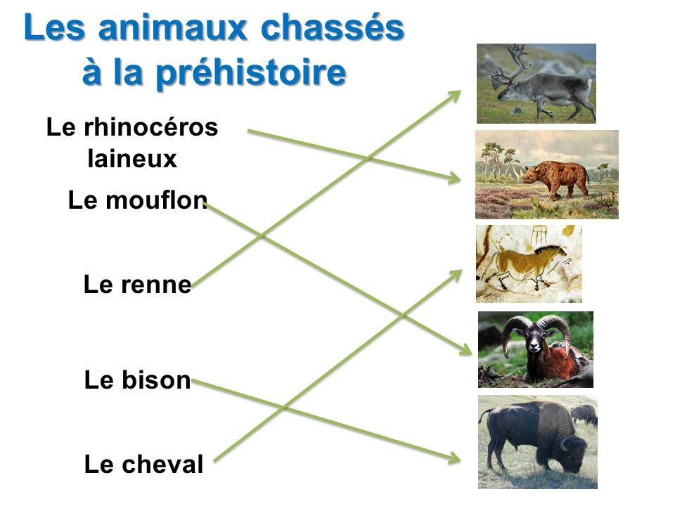 Les animaux chassés à la préhistoire
