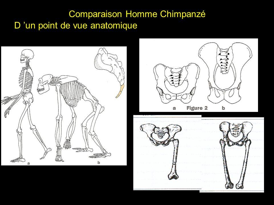 Comparaison Homme Chimpanzé