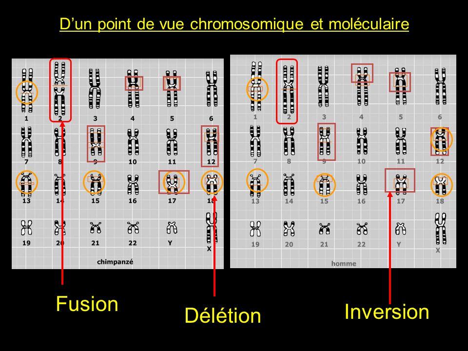 D'un point de vue chromosomique et moléculaire