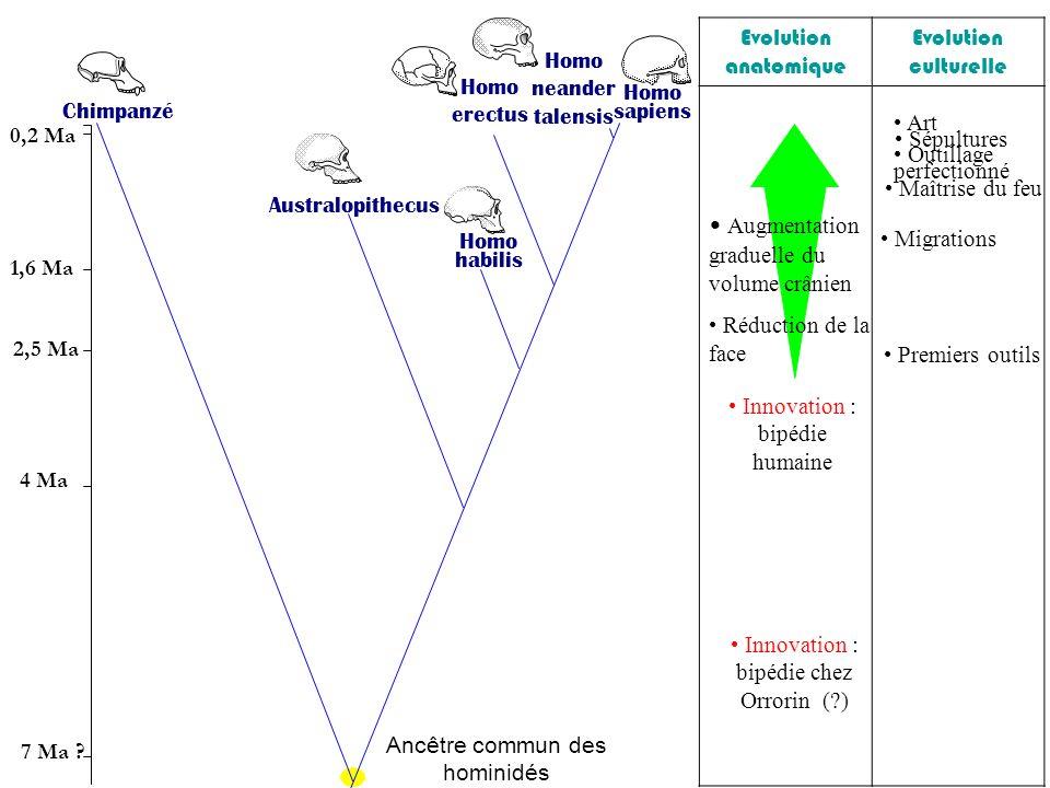 Augmentation graduelle du volume crânien