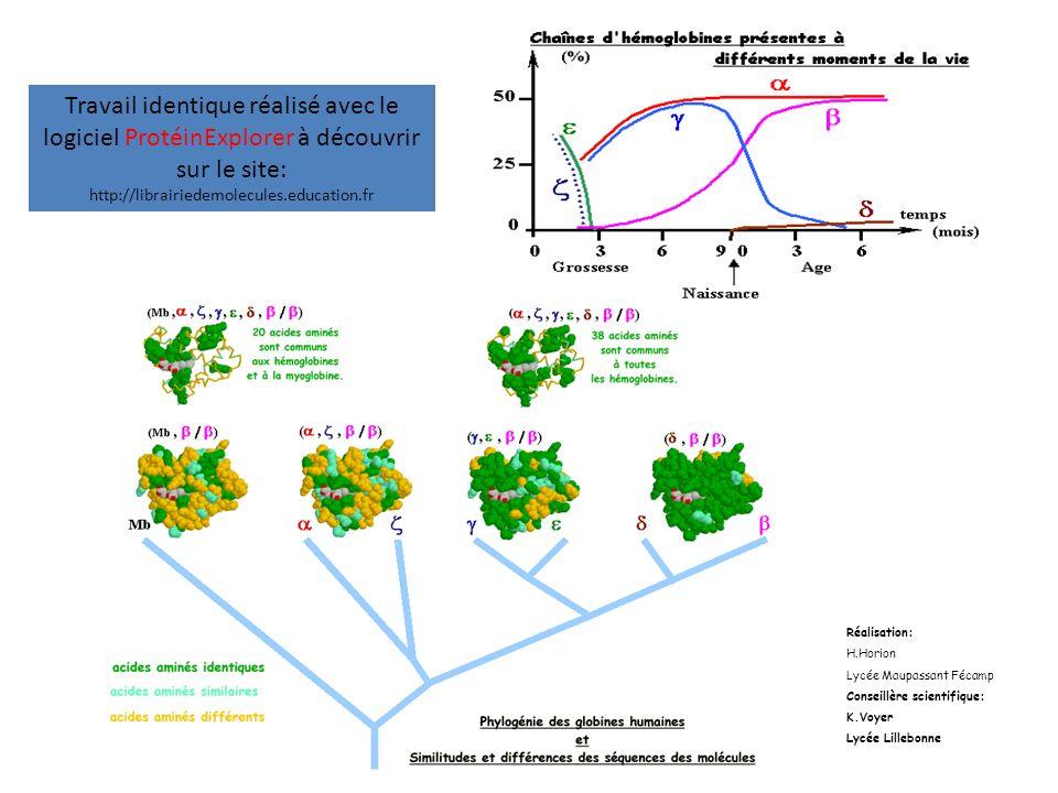 Travail identique réalisé avec le logiciel ProtéinExplorer à découvrir sur le site: http://librairiedemolecules.education.fr