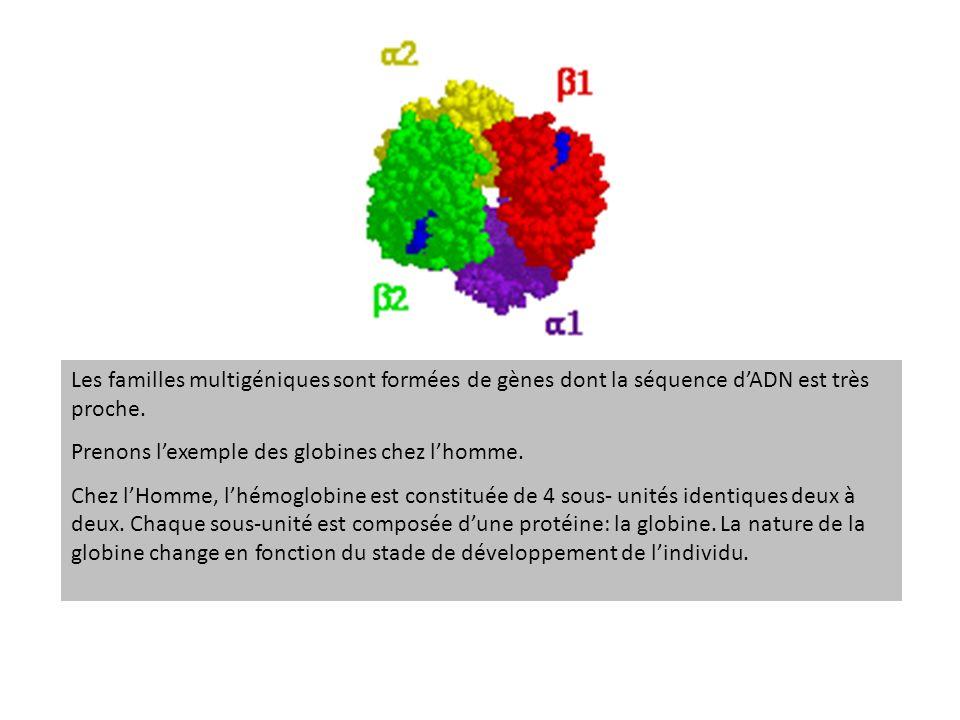 Les familles multigéniques sont formées de gènes dont la séquence d'ADN est très proche.