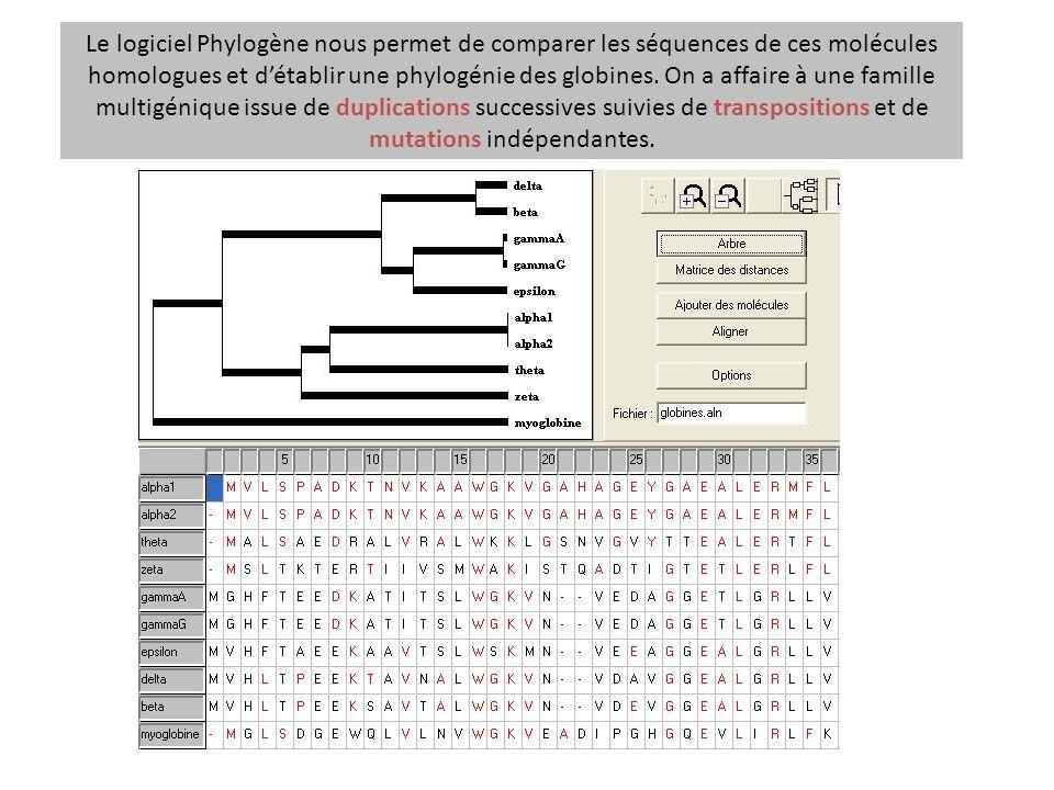 Le logiciel Phylogène nous permet de comparer les séquences de ces molécules homologues et d'établir une phylogénie des globines.