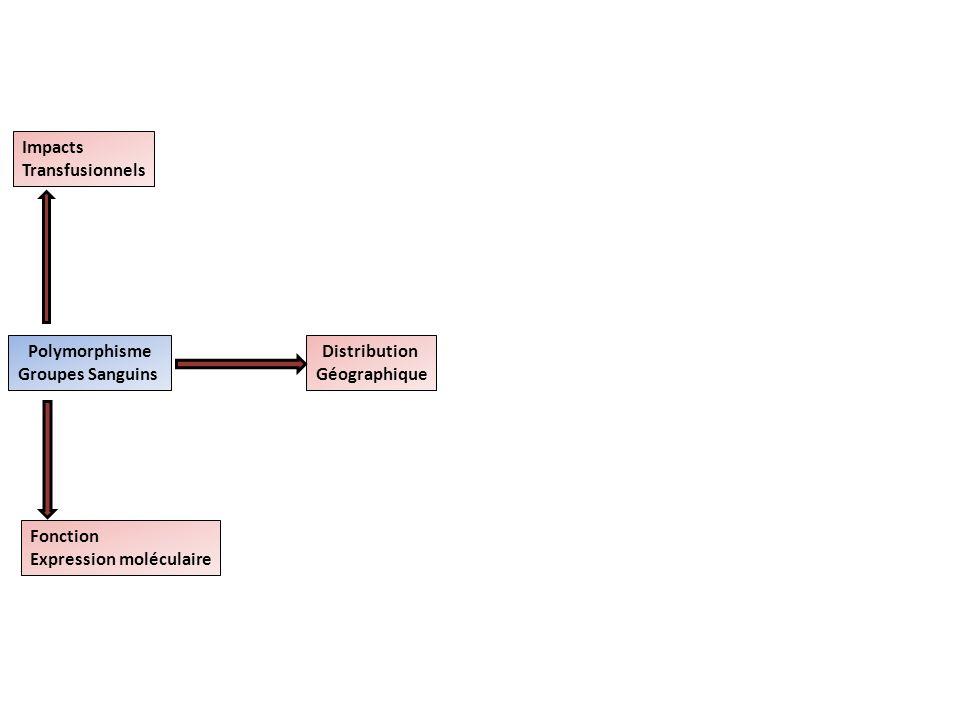 Impacts Transfusionnels. Polymorphisme. Groupes Sanguins. Distribution. Géographique. Fonction.