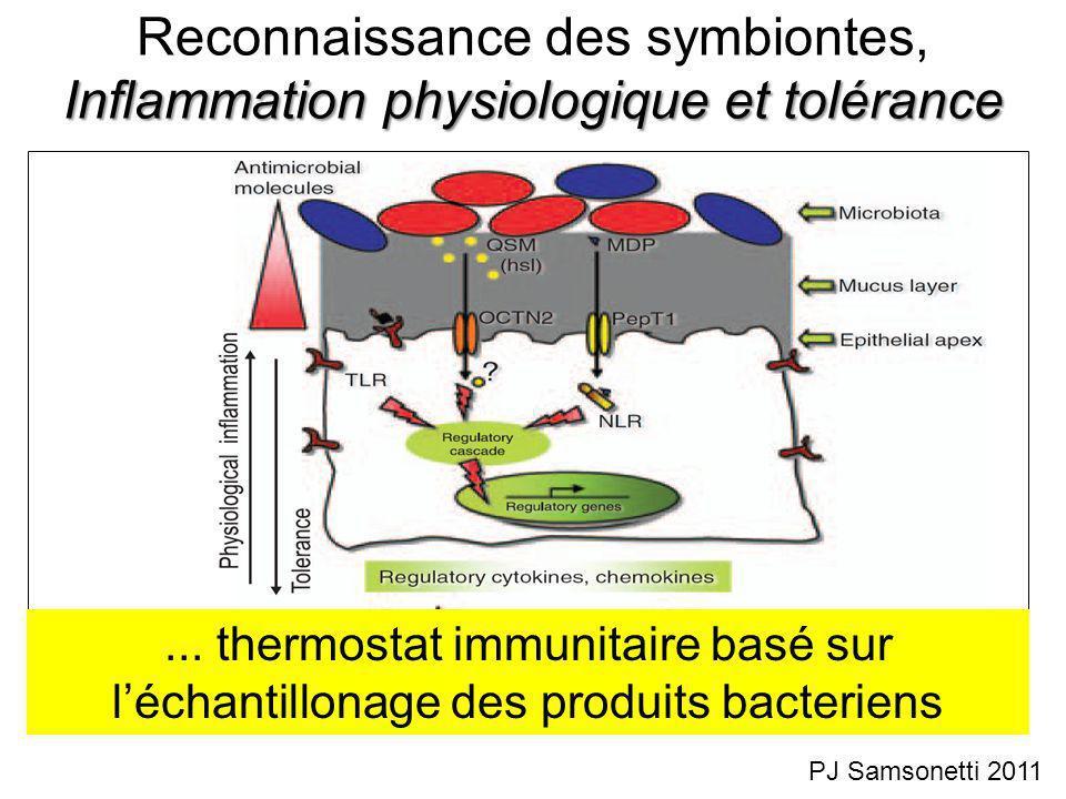 Reconnaissance des symbiontes, Inflammation physiologique et tolérance