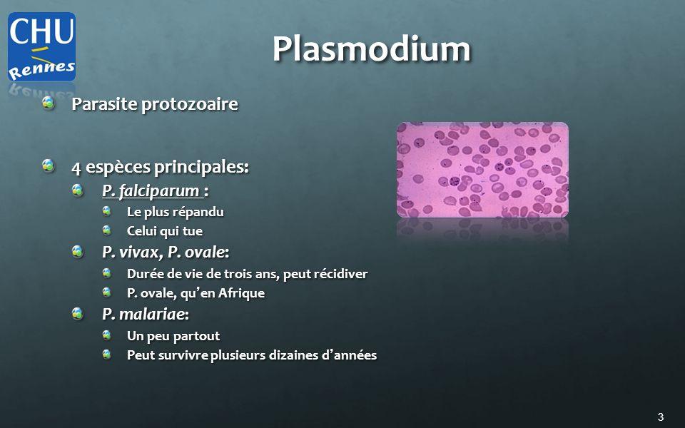 Plasmodium Parasite protozoaire 4 espèces principales: P. falciparum :